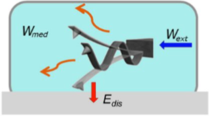 Development and applications of atomic force microscopy for the study of proteins and cancer cells