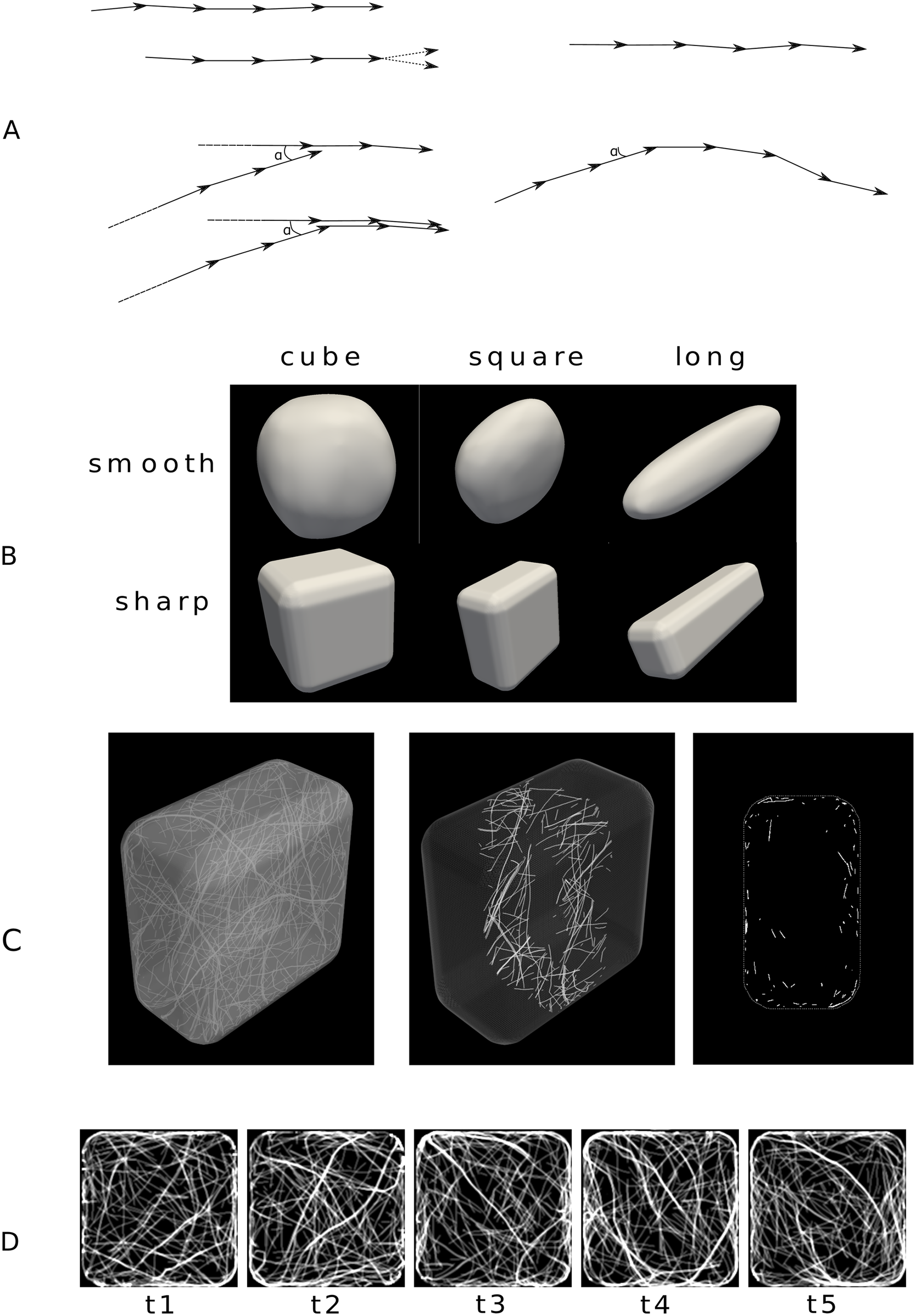 Shapes of simulated cells