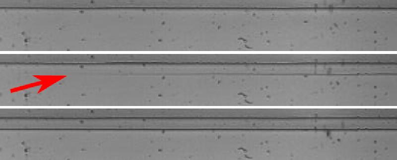 Focus: Micro-instabilité des fronts de pelage