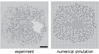 Formation of labyrinthine drying patterns in 2D model porous media